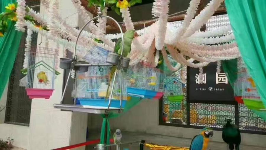 全国动物出租动物展览动物租赁动物表演